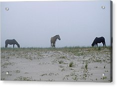 Wild Horses In The Sand Dunes On Sable Acrylic Print by Justin Guariglia