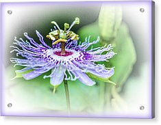 Wild Passion - Floral Acrylic Print by Barry Jones