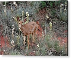 'wild' Times At Garden Of The Gods Colorado Acrylic Print by Christine Till