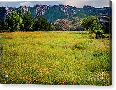 Wildflower Field In The Wichita Mountains Acrylic Print by Tamyra Ayles