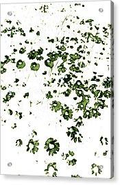 Wildflower Meadow Acrylic Print by Frank Tschakert