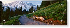 Wildflowers At Sunset, Mount Rainier Acrylic Print by Panoramic Images