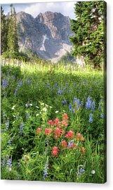 Wildflowers In Albion Basin Utah Acrylic Print by Utah Images