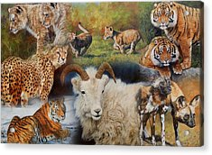 Wildlife Collage Acrylic Print by David Stribbling