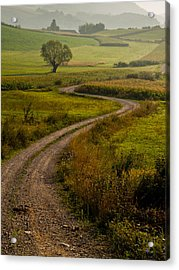 Willow Acrylic Print by Davorin Mance