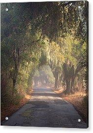Willow Road Acrylic Print by Joseph Smith