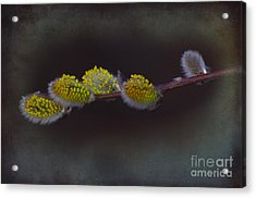 Willows Of April Acrylic Print by The Stone Age