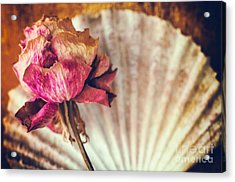 Wilted Rose And Shell Acrylic Print by Silvia Ganora