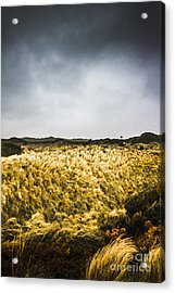 Wind Blown Grassland  Acrylic Print by Jorgo Photography - Wall Art Gallery