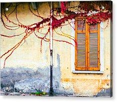 Window And Red Vine Acrylic Print by Silvia Ganora