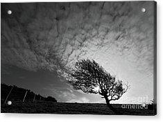 Windswept Blackthorn Tree In Winter Acrylic Print by James Brunker