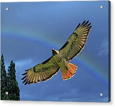 Wings 2 Acrylic Print by Donna Kennedy