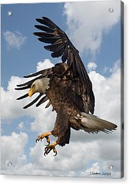 Wings Beak And Talons Acrylic Print by Larry Linton