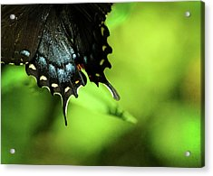 Wings Acrylic Print by Rebecca Sherman