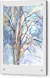 Winter Birch Acrylic Print by Claudia Smaletz