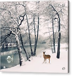 Winter Calls Acrylic Print by Jessica Jenney