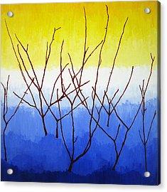 Winter Dogwood Acrylic Print by Oliver Johnston