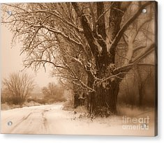 Winter Dream Acrylic Print by Carol Groenen
