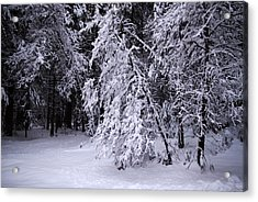 Winter Forest Acrylic Print by Lee Chon