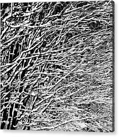 Winter Acrylic Print by Gert Lavsen