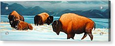 Winter In Yellowstone Valley Acrylic Print by Kevin Ballew