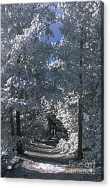 Winter Pathway Acrylic Print by Sandra Bronstein
