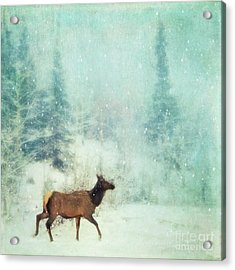 Winter Stroll Acrylic Print by Priska Wettstein