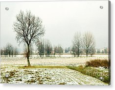 Winter Trees Acrylic Print by Silvia Ganora