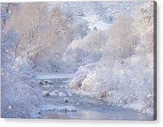 Winter Wonderland - Colorado Acrylic Print by Darren White