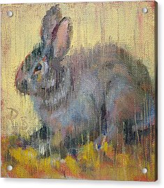 Wise Rabbit Acrylic Print by Donna Shortt