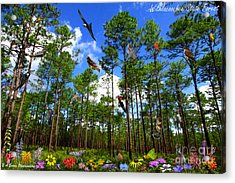 Withlacoochee State Forest Nature Collage Acrylic Print by Barbara Bowen
