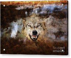 Wolf Art Acrylic Print by Wildlife Fine Art