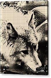 Wolf Lite Acrylic Print by Debra     Vatalaro