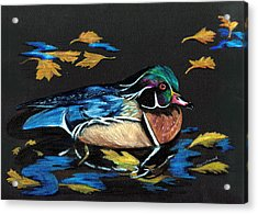 Wood Duck And Fall Leaves Acrylic Print by Carol Sweetwood