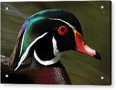 Wood Duck At Beaver Lake Stanley Park Vancouver Canada Acrylic Print by Pierre Leclerc Photography