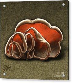 Wood Ear Mushrooms Acrylic Print by Marshall Robinson