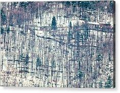 Wood In Winter Acrylic Print by Silvia Ganora