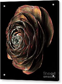 Wood Rose Acrylic Print by Russ Brown