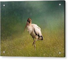 Wood Stork - Balancing Acrylic Print by Kim Hojnacki