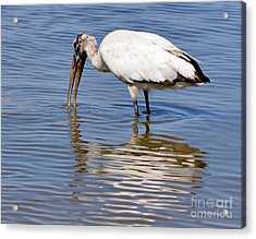Wood Stork Acrylic Print by Louise Heusinkveld