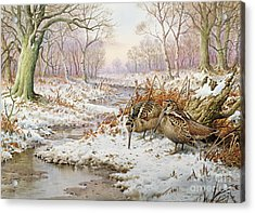 Woodcock Acrylic Print by Carl Donner