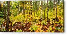 Woodland Panorama Acrylic Print by Michael Peychich
