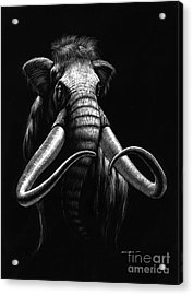 Woolly Mammoth Acrylic Print by Stanley Morrison
