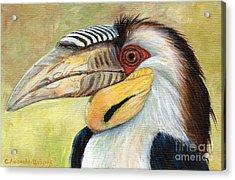 Wreathed Hornbill  Acrylic Print by Svetlana Ledneva-Schukina