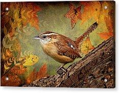 Wren In Autumn  Acrylic Print by Bonnie Barry