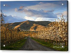 Yakima Valley Spring Acrylic Print by Mike  Dawson