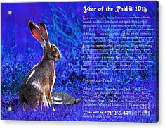 Year Of The Rabbit 2011 . Blue Acrylic Print by Wingsdomain Art and Photography