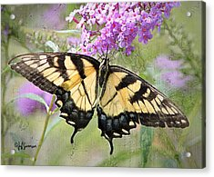 Yellow And Black Beauty Acrylic Print by Jeff Swanson