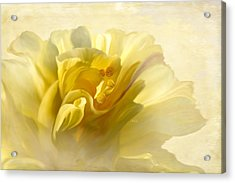 Yellow Hibiscus Acrylic Print by Angela A Stanton