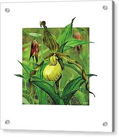 Yellow Lady Slipper Acrylic Print by JQ Licensing